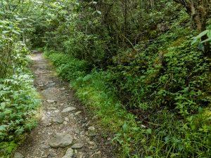 Rocky Wet Flat Laurel Creek Trail