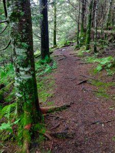 Richland Balsam Trail in Fraser Fir