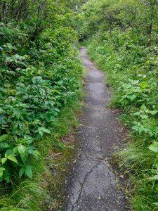 Paved Beginning of Richland Balsam Trail