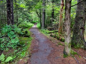 Richland Balsam Trail in the Spruce
