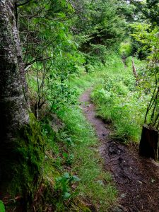 Soft Light on the Richland Balsam Trail