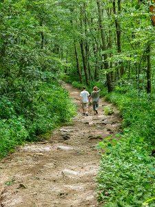 Hiking the Old Road on Whiteside Mountain