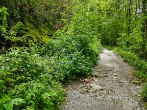 Eroded Stretch of Trail