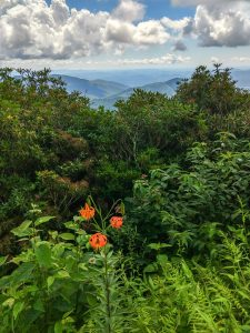 Turks Cap Lily Beside the Blue Ridge Parkway