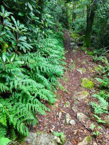 Fern Lined Appalachian Trail