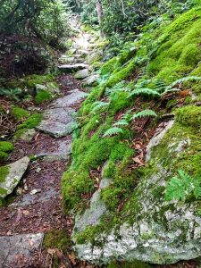 Mossy Outcrop on the Appalachian Trail