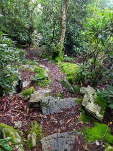 Mossy Rocks on the Appalachian Trail