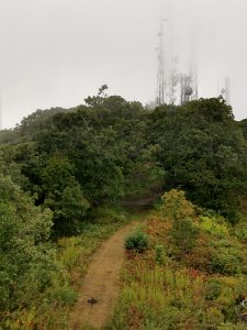 View of Communications Towers from Cowee Bald