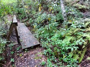 Bridge on the Walton Interpretive Trail
