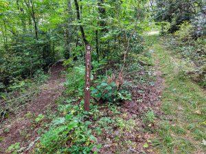 Walton Interpretive Trail on FS 86F