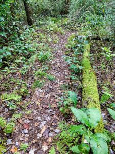 Mossy Log on the Walton Interpretive Trail