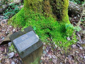 Mossy Base of a Dead White Oak on the Walton Interpretive Trail