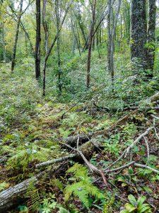 Open Woods along the Walton Interpretive Trail