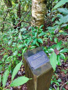 Yellow Birch Sign on the Walton Interpretive Trail