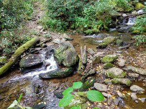 Little Andy Creek Crossing on Elk Pen Trail