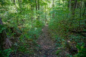 Steep Section of Little Andy Trail