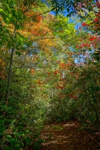 Start of Fall Color on Little Andy Trail