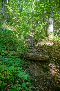 Wet Section of Little Andy Trail