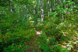 Top of Upper Corner Rock Trail
