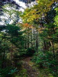 Autumn Leaves on the Buncombe Horse Range Trail