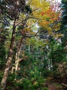Fall Color on the Buncombe Horse Range Trail