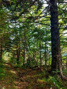 Buncombe Horse Range Trail near MST