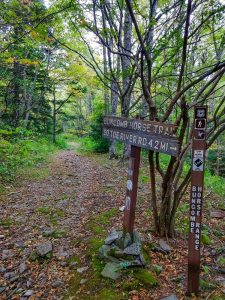 Buncombe Horse Range and Mountains to Sea Trail Signs
