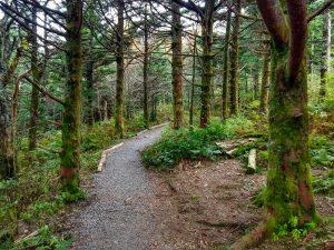 Balsam Nature Trail