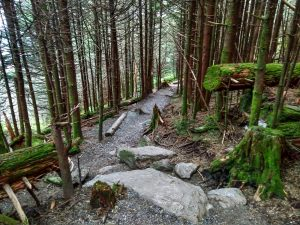 Rock Steps on the Balsam Nature Trail