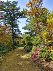 Fall Color along FS 482B
