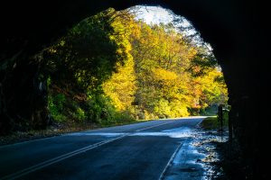 Looking Out of Twin Tunnels in Autumn