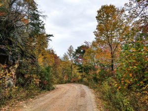 Curtis Creek Road in Fall Color