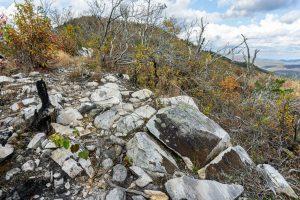 Trail Near the Summit of Bald Knob