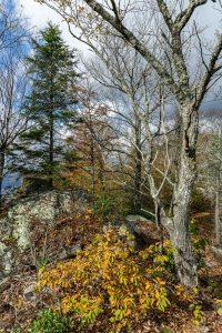 Summit Forest on Bald Knob