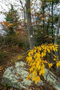 Autumn Leaves on Bald Knob