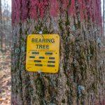 Bearing Tree on the Bluff Mountain Loop Trail
