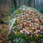 Fall Leaves on a Boulder