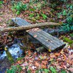 Tree Down on Bridge Along Betty Place Trail