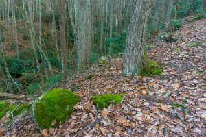 Cove and Mossy Rock on the Betty Place Trail