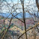 Limited Wintertime Views on the Bluff Mountain Loop Trail