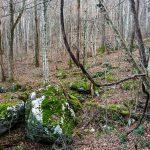 Mossy Rocks Beside Bluff Mountain Loop Trail