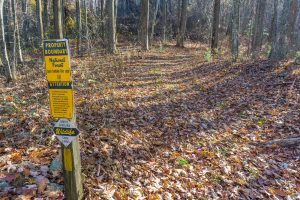 Bluff Mountain Loop Trail at National Forest Boundary