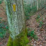 A Skirt of Moss on the Betty Place Trail