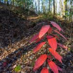 Last of Fall Color on the Bluff Mountain Loop Trail