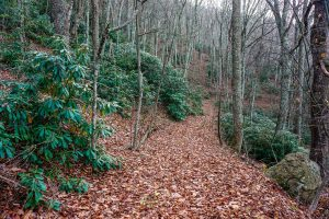 Bluff Mountain Loop Trail Through Rhododendron