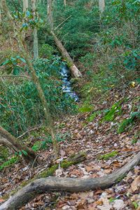 View of West Fork Shut-In Creek on the Betty Place Trail