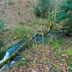 Bluff Mountain Loop Trail Crossing West Fork Shut-In Creek