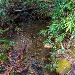 Curtis Creek Headwaters