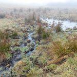 Bog Beside the Wildcat Rock Trail
