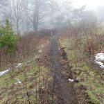 Wildcat Rock Trail in Pasture